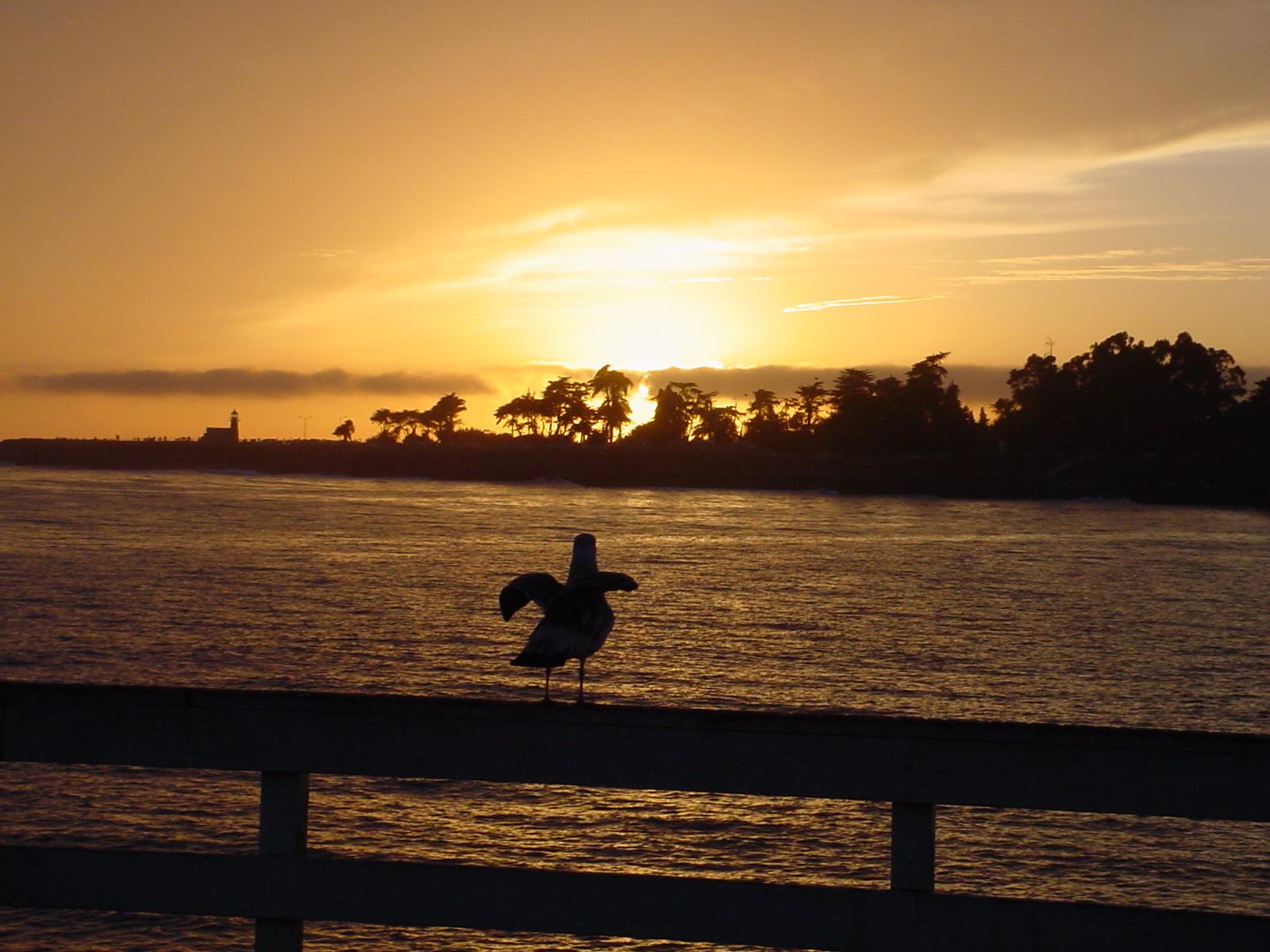 Sunset Rail Bird